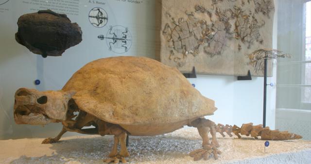 Những loài động vật tuyệt chủng vì sự thiếu hiểu biết của loài người - Ảnh 3.