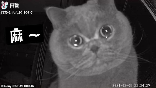 Quá bơ vơ vì chủ nhân bỏ lại một mình, mèo cưng ngồi trước camera rơi nước mắt - Ảnh 2.