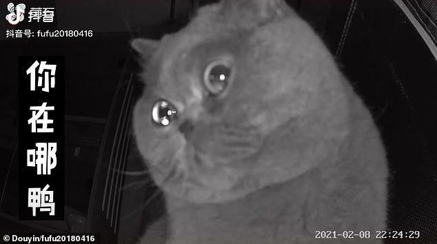 Quá bơ vơ vì chủ nhân bỏ lại một mình, mèo cưng ngồi trước camera rơi nước mắt - Ảnh 3.