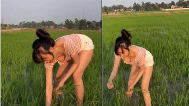 Hớ hênh vòng một gợi cảm khi đi thu hoạch lúa, bà Tưng bất ngờ gặp vô số chỉ trích - Ảnh 4.