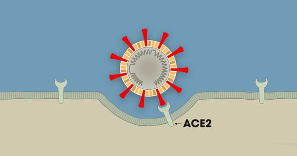Hiểu cơ chế hoạt động của 5 dòng thuốc COVID-19, từ góc nhìn thú vị của trò chơi Đế Chế - Ảnh 2.