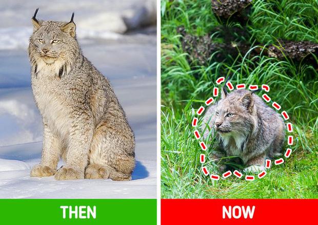 Các loài vật trên Trái đất đang ngày càng bé lại, nhưng đố bạn biết lý do vì sao - Ảnh 2.