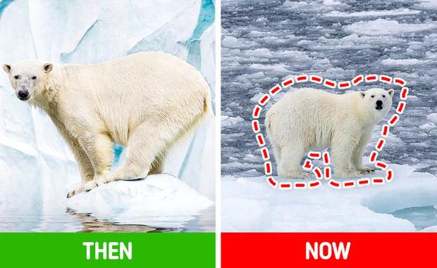 Các loài vật trên Trái đất đang ngày càng bé lại, nhưng đố bạn biết lý do vì sao - Ảnh 5.
