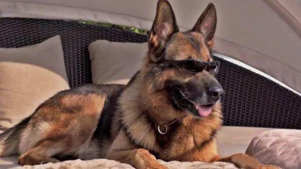 Gia tộc chó giàu nhất hành tinh: Tài sản 400 triệu USD, sở hữu tập đoàn riêng, biệt thự 7000 mét vuông chạy mỏi chân - Ảnh 1.