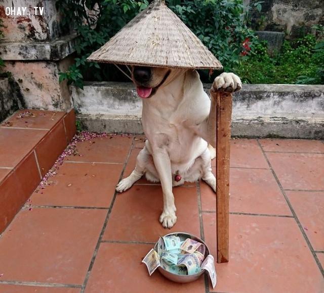 Chó đội nón mê – Giai thoại kinh dị về vận rủi khiến nhiều người sợ hãi - Ảnh 3.