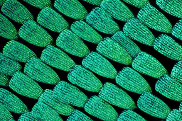 Những đồ vật được phóng đại qua kính hiển vi Photo-1-1619965643454445077107