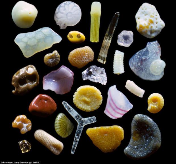 Những đồ vật được phóng đại qua kính hiển vi Photo-2-16199656454841470288370
