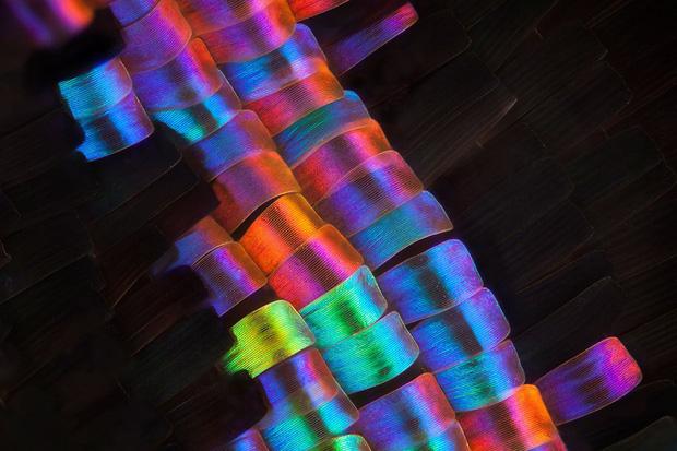 Những đồ vật được phóng đại qua kính hiển vi Photo-9-1619965645708986590675