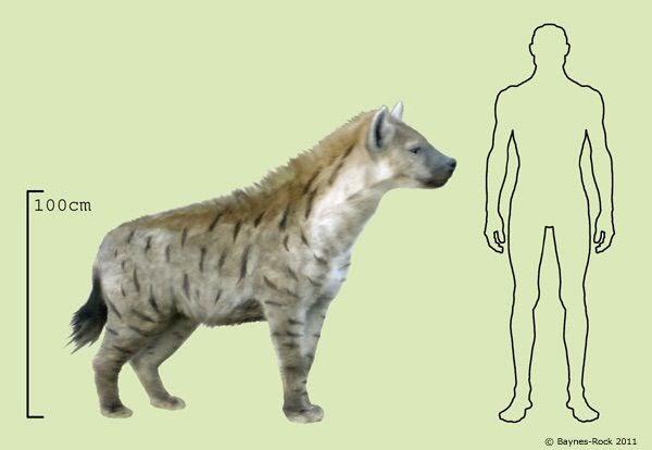 Top 10 loài động vật khủng khiếp nhất mà người tiền sử từng phải đối mặt - Ảnh 7.