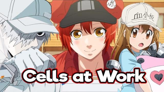Top 10 anime hút người xem bởi những tình huống hài cực bựa, xem nhiều có khi còn bị ngáo theo - Ảnh 6.