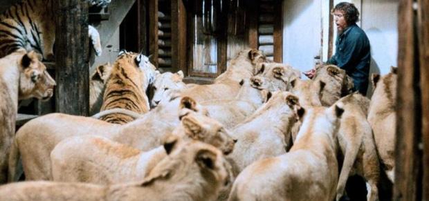 Thành viên ekip bị sư tử nhai đầu, nữ chính bị vồ suýt mất thị giác, cả trăm người bị thương trong bộ phim nguy hiểm nhất lịch sử - Ảnh 4.