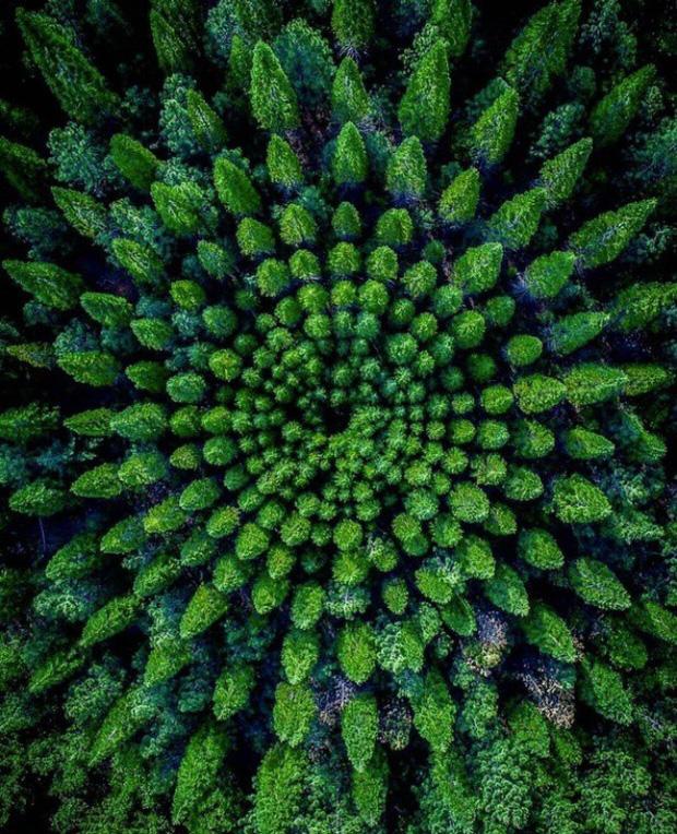 Loạt hình giúp bạn mở mang tầm mắt tới sự kỳ lạ của vạn vật xung quanh - Ảnh 5.