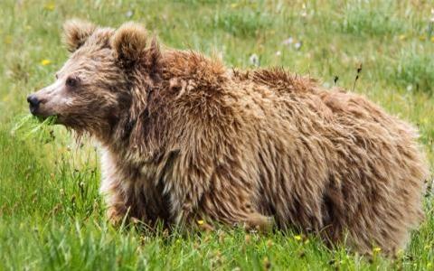 Quái vật người tuyết Yeti có thực sự tồn tại, hay chỉ là tưởng tượng của loài người? - Ảnh 5.