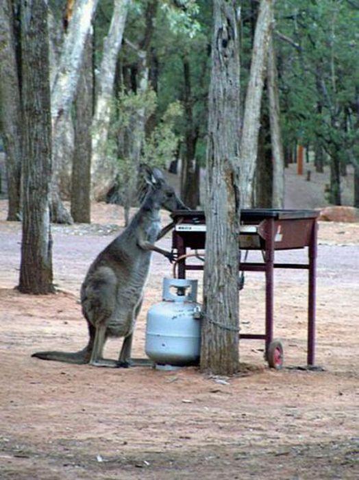 Loạt ảnh cho thấy những điều kỳ quặc chỉ có ở Úc - Ảnh 12.