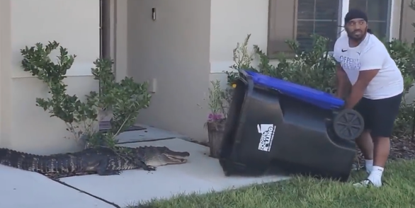 Không có đồ chơi, người đàn ông dùng thùng rác out play cá sấu trong một nốt nhạc - Ảnh 3.