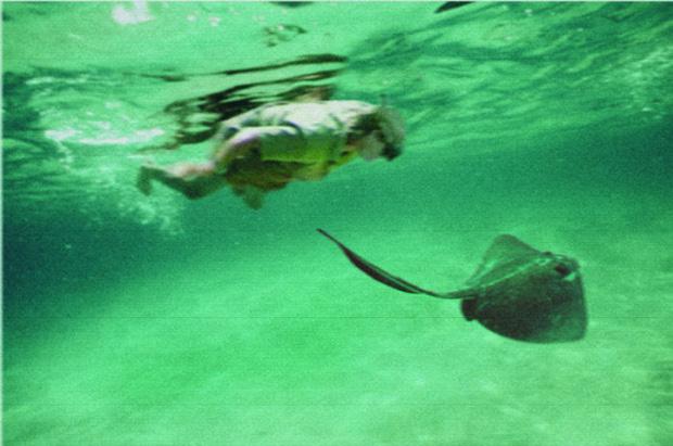 Cái chết nghiệt ngã của thợ săn cá sấu Steve Irwin: Nhà động vật học hàng đầu thế giới và câu chuyện sinh nghề tử nghiệp - Ảnh 5.