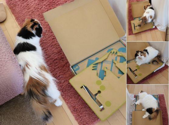 Con mèo này chỉ cần đi một vòng là đã kết thân được với chiếc vỏ hộp, và…