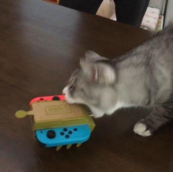 Thanh niên mèo này lại vô cùng hung hãn, cắn hết mọi thứ được lắp ra từ Nintendo Labo.