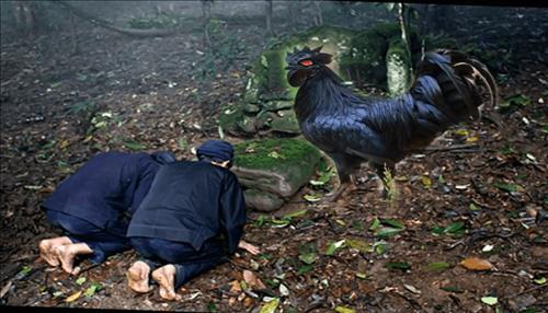 Khám phá truyền thuyết về ma gà - ác linh nổi tiếng của cả thế giới - Ảnh 5.