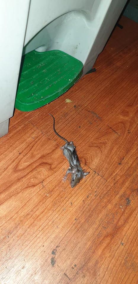 Bánh mỳ Pewpew bất ngờ bị tố có chuột chết trong cửa hàng và phản ứng bất ngờ của anh chàng streamer nổi tiếng - Ảnh 3.