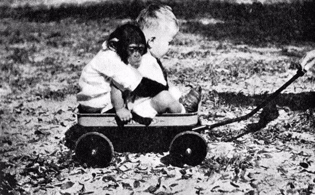 Thí nghiệm hãi hùng của nhà tâm lý học suýt biến con đẻ thành tinh tinh - Ảnh 5.