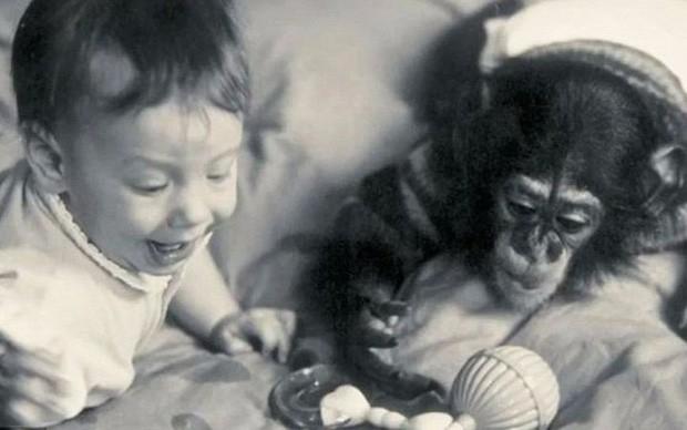 Thí nghiệm hãi hùng của nhà tâm lý học suýt biến con đẻ thành tinh tinh - Ảnh 6.