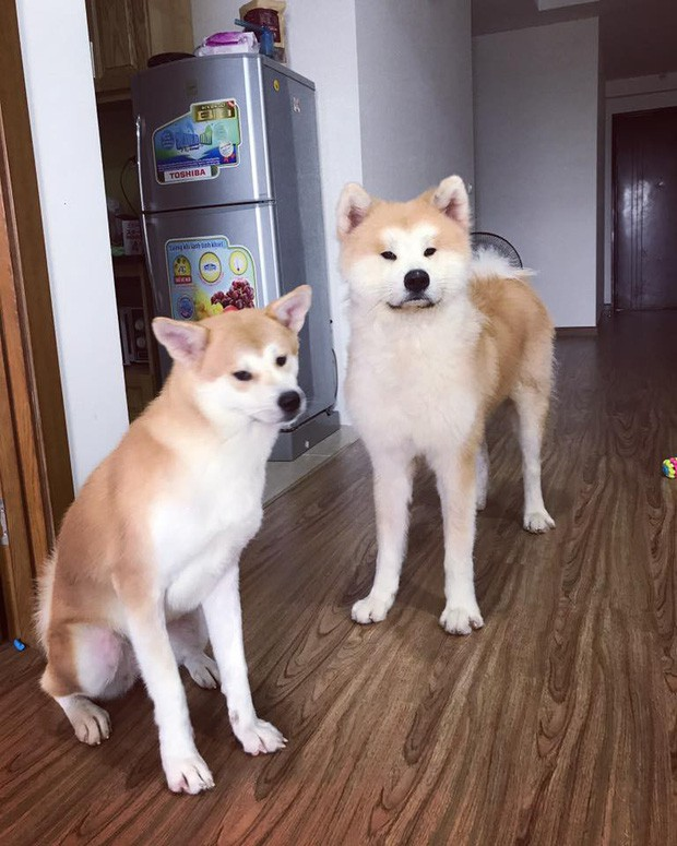 Giữa một rừng nhà sáng tạo nội dung siêu ngầu của Lotus, từ đâu hiện ra một chú chó, hoá ra là Momo Inu lừng danh - Ảnh 4.