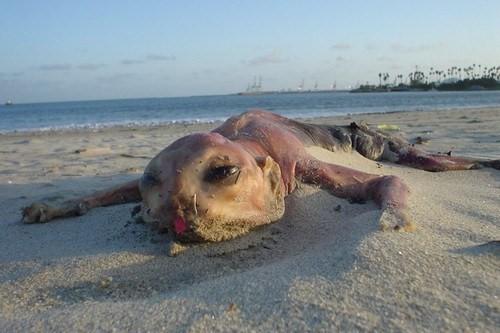 Sự tồn tại của những sinh vật đáng sợ và kì dị nhất thế giới (P.2) - Ảnh 3.