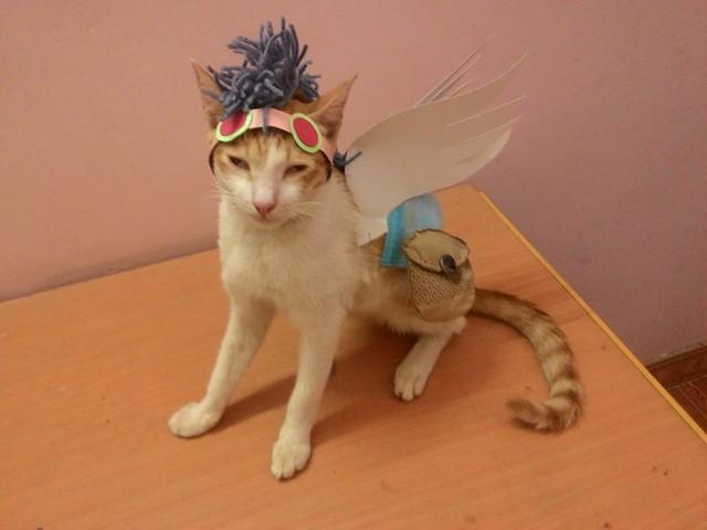 Courier mèo.