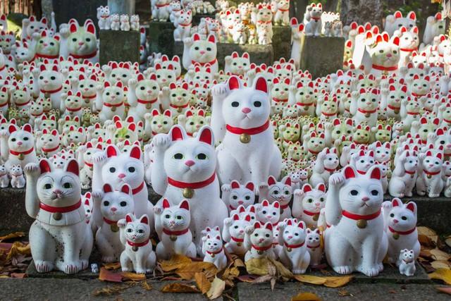 Mua Mèo Chiêu Tài trong năm Chuột: Có nên không? - Ảnh 3.