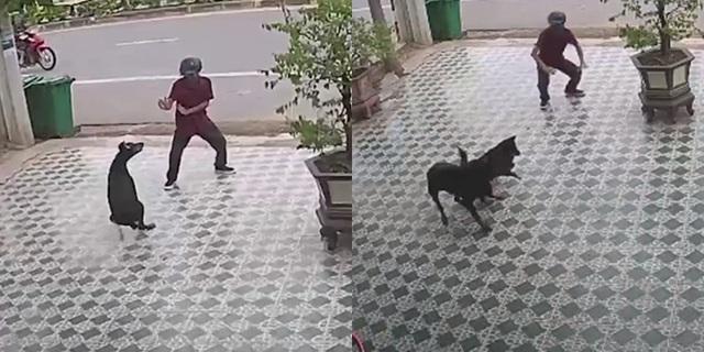 Hình ảnh đáng chú ý của người đàn ông bình tĩnh đi đường quyền trước bầy chó hung hãn