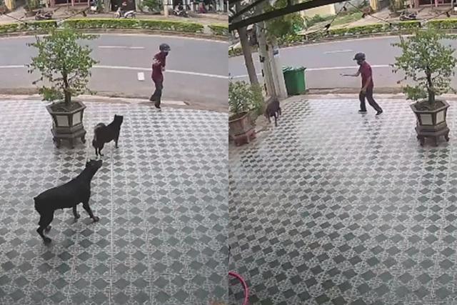 Khi những chú chó sau đó quay xe bỏ chạy còn người đàn ông ra về trong hiên ngang và kiêu hãnh