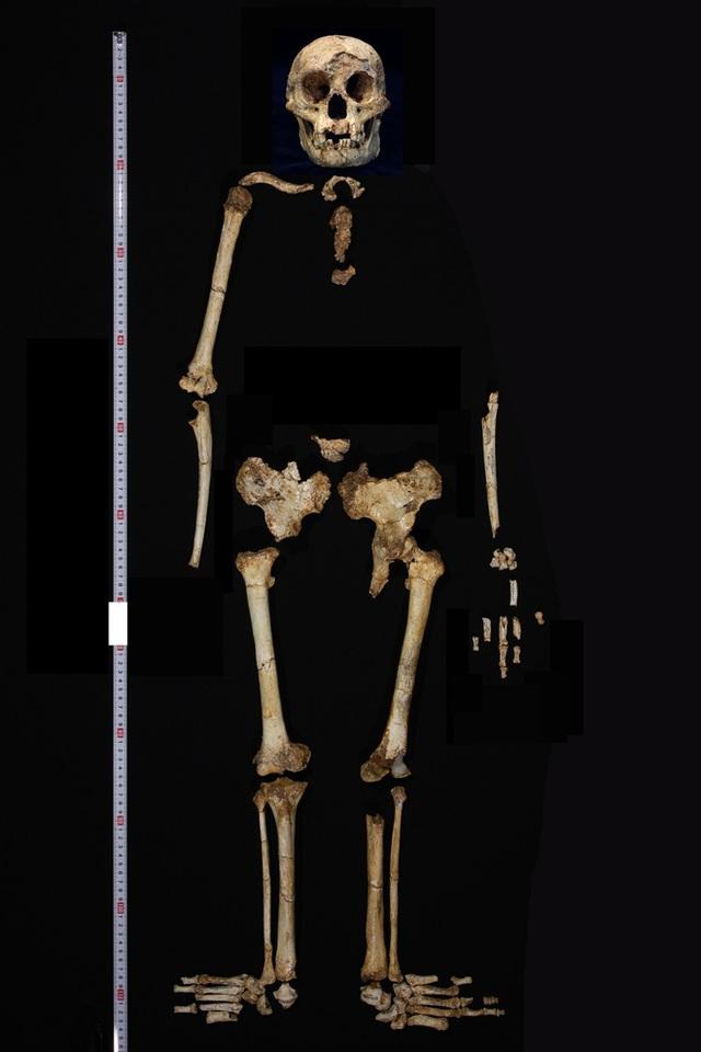 Những ví dụ cho thấy tiến hóa đôi khi cũng hà tiện, tận dụng cùng một đặc điểm cho hai loài khác nhau - Ảnh 8.