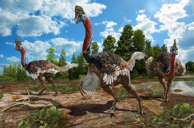 Những ví dụ cho thấy tiến hóa đôi khi cũng hà tiện, tận dụng cùng một đặc điểm cho hai loài khác nhau - Ảnh 3.