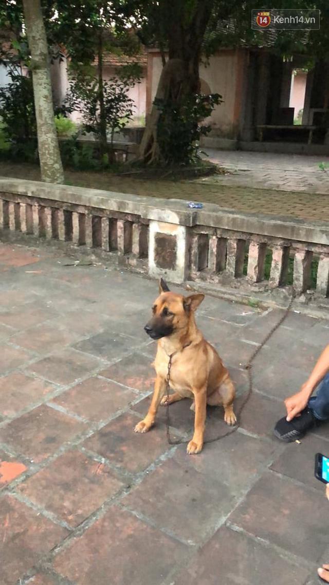 Cậu Vàng tung first look giới thiệu sinh vật lạ: Vẫn là chó Nhật nhưng lông đỏ, hàng siêu hiếm? - Ảnh 8.