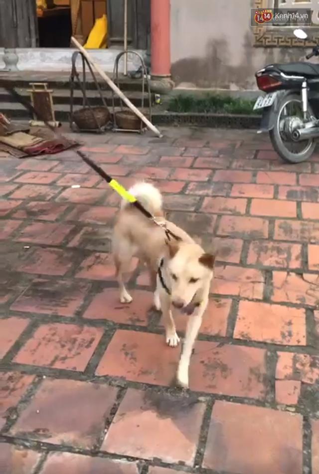 Cậu Vàng tung first look giới thiệu sinh vật lạ: Vẫn là chó Nhật nhưng lông đỏ, hàng siêu hiếm? - Ảnh 9.
