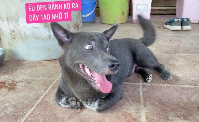Idol Nguyễn Văn Dúi gây sốc với ngoại hình già nua, béo phệ và lại còn bị xích cổ đáng thương? - Ảnh 6.