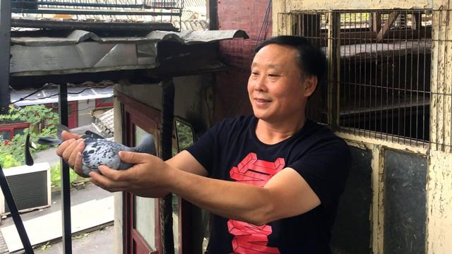 Đại gia giấu mặt bỏ gần 2 triệu USD mua 1 chú chim bồ câu, lý do thực sự mới gây sốc - Ảnh 3.