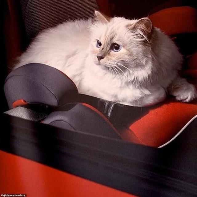 Được thừa kế 4635,5 tỷ đồng từ chủ, con mèo tỷ phú tận hưởng cuộc sống sang chảnh nhất thế giới - Ảnh 3.
