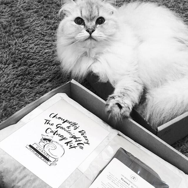 Được thừa kế 4635,5 tỷ đồng từ chủ, con mèo tỷ phú tận hưởng cuộc sống sang chảnh nhất thế giới - Ảnh 11.