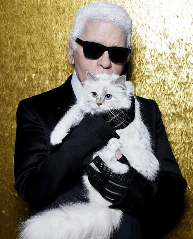 Được thừa kế 4635,5 tỷ đồng từ chủ, con mèo tỷ phú tận hưởng cuộc sống sang chảnh nhất thế giới - Ảnh 1.