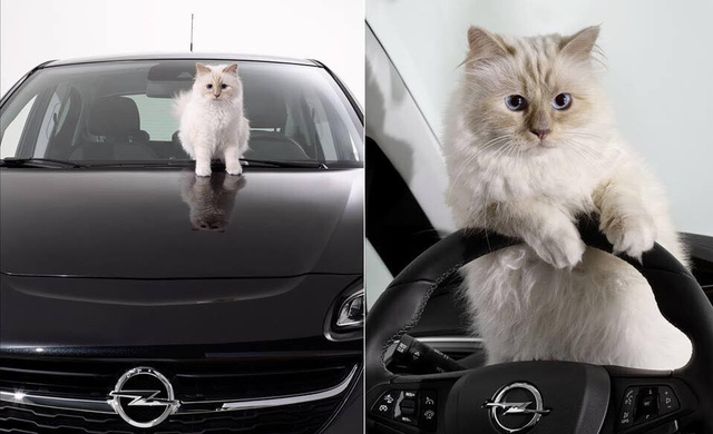 Được thừa kế 4635,5 tỷ đồng từ chủ, con mèo tỷ phú tận hưởng cuộc sống sang chảnh nhất thế giới - Ảnh 2.