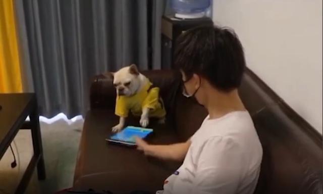 Đang chơi game thì bị chủ phá, chú chó bá đạo ném luôn iPad, quay sang lườm nguýt khiến cộng đồng mạng cực kỳ nể phục - Ảnh 2.