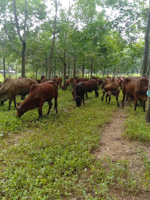Tuyển người chăn bò với mức lương ngang nhân viên văn phòng, bài đăng khiến cộng đồng mạng xôn xao bàn tán - Ảnh 3.