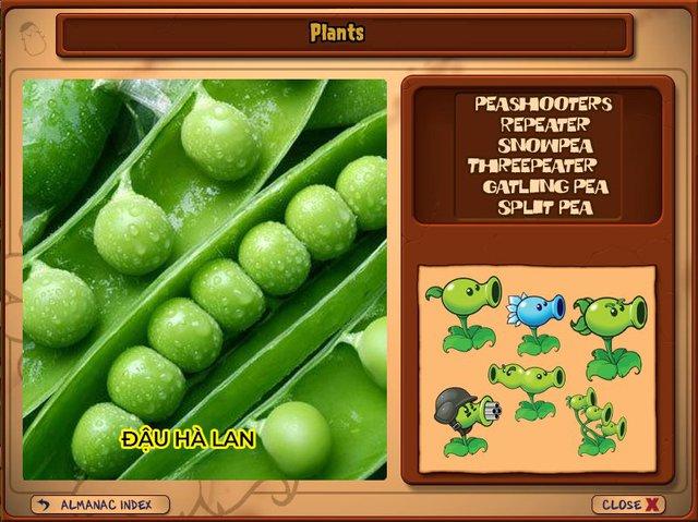 Nguyên mẫu đời thực của những loài cây đáng gờm nhất trong Plants vs. Zombies - Ảnh 1.
