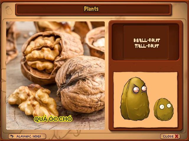 Nguyên mẫu đời thực của những loài cây đáng gờm nhất trong Plants vs. Zombies - Ảnh 4.