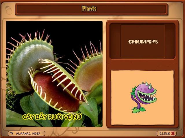 Nguyên mẫu đời thực của những loài cây đáng gờm nhất trong Plants vs. Zombies - Ảnh 6.