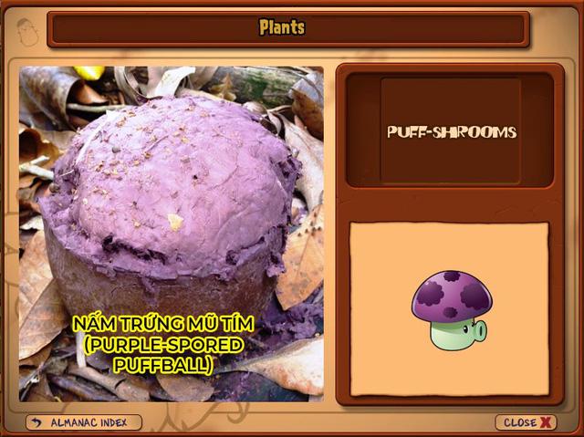 Nguyên mẫu đời thực của những loài cây đáng gờm nhất trong Plants vs. Zombies - Ảnh 7.