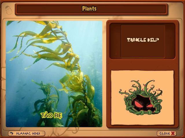 Nguyên mẫu đời thực của những loài cây đáng gờm nhất trong Plants vs. Zombies - Ảnh 11.