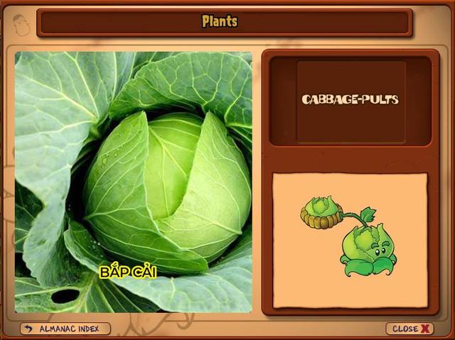 Nguyên mẫu đời thực của những loài cây đáng gờm nhất trong Plants vs. Zombies - Ảnh 19.